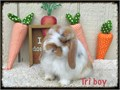 Baby bunnies for adoption Eight weeks old Very sweet Maggie 714-420-5084 Text only