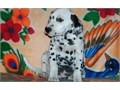Dedicated Dalmatian Puppies For SaleThey are very friendly with other pets and children Ready to go