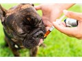 Lots of research has been conducted on CBD oil to treat ailments in dogs and the results look promis