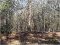 Previous mobile lot heavily wooded very private located behind 2931 Quail Run The property is lo