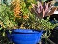 Gorgeous Blue Pot