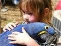 Lovely pair of hyacinth macaw DNA sexed closed leg ring call for more info no time wasters she is