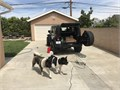 I am currently studing out my full breed American Akita AKC  Dog is Not For Sale  STUD ONLY   F