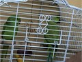 Los Angeles Birds for Sale and Adoption | Los Angeles Classifieds