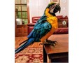 excellent macaw Ready For more information and pics text here 321 754-8460