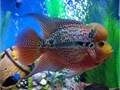 This fish is about 556 healthy great eater very active an can be hand fed Im asking 180 obo