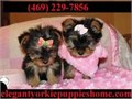 puppies ready for a new home   super playful and loving  they will play w