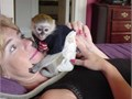 Adorable Capuchin monkeys ready for new loving homes All vaccinated and vet checked and come with h