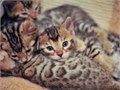 fghg Bengal kittens  Text us at 571 370-3395 for more info of my pets healhty Male and female ki