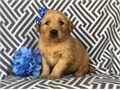 Im a super happy and playful puppy Im social and love people Im more darker then my 8 littermat