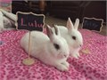 Bunnies 6 months old  litter box trained