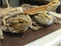 Hello recycler I am a reptile rescue We rescue sick injured diseasedunwanted and emaciated rep