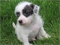Most cute Jack Russell puppiesContact me now for more details 202 858-7150  Serious inquir