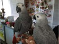 They are very socialize with kids and others house pets and wea re looking for good and caring home
