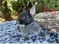 We have Netherland Dwarf baby bunnies and in search of our forever homes Categorized as the smalles