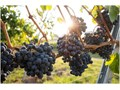 Buellton wine tasting  Artisan ExcursionArtisan Excursion brings fun and low cost wine tasting to