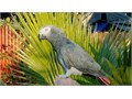 Text for more information401 305-0156Lovely parrot only 17 months old trying to talk very tame
