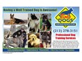 PROFESSIONAL DOG TRAINING FOR ALL BREEDS  OBEDIENCE PROTECTION AND PROBLEM BE