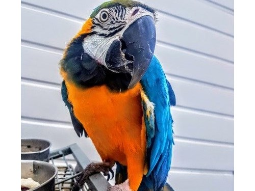 clean macaw available