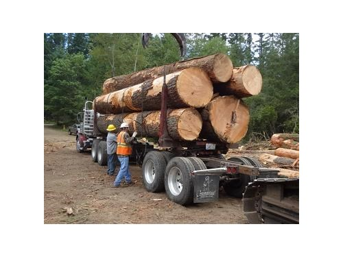 King County WA Logging