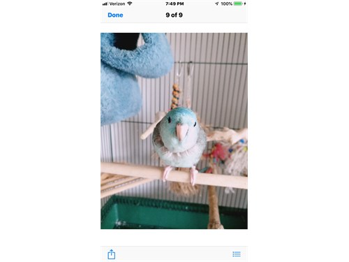 Lineolated parakeet &cage