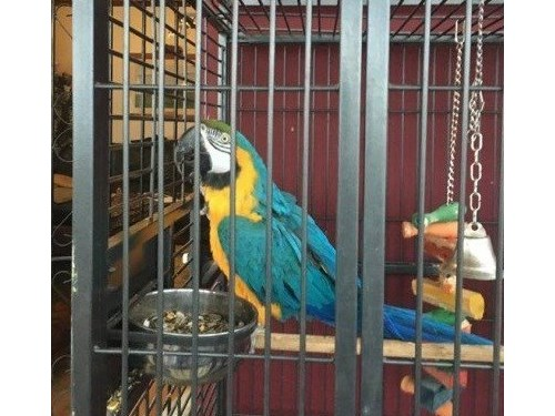lovely macaw available