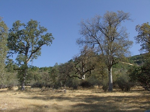 5 Acres in Whitmore, CA