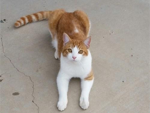indoor/outdoor Cat