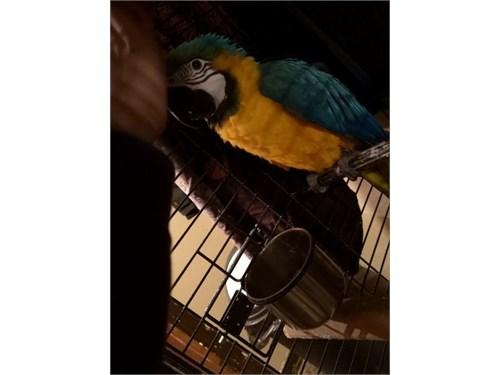 fantastic macaw Ready