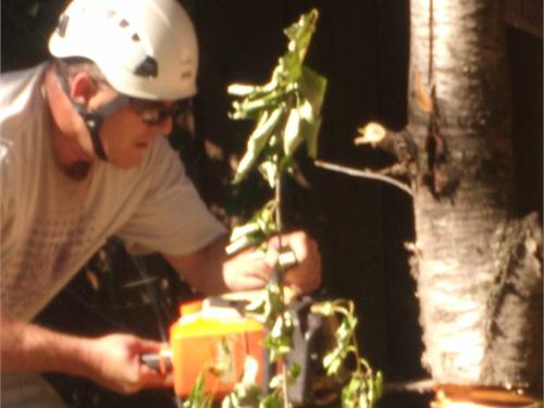 Chico Tree Service