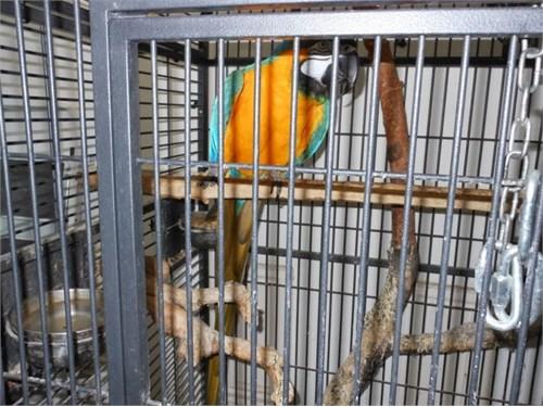 graceful macaw Ready