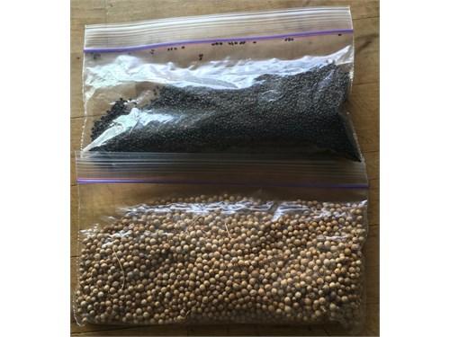 Cilantro/Basil Seeds