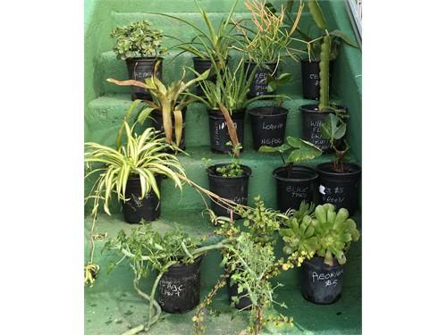 $5 Plants