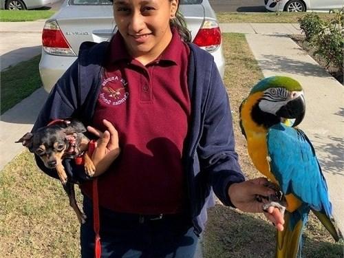 Beautiful Macaws Parrots