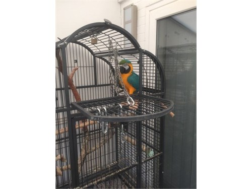 gracious macaw available