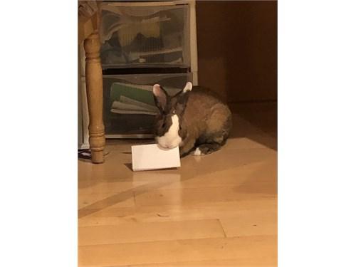 2 Bonded bunnies