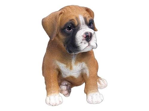 pure bred boxer pups