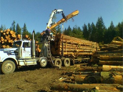 Logging Timber Washington