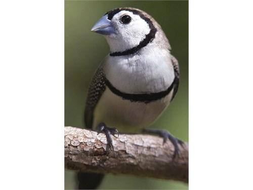TheFinchFarm.com Birds!!!