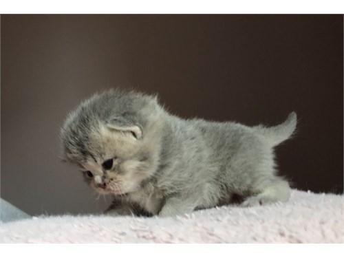 Gorgeous 4 Kittens