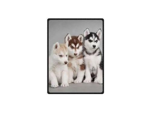 female seberian husky pup