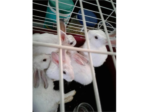 Bunnies for adoption