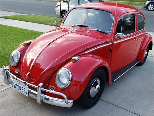 Clean 65 Bug