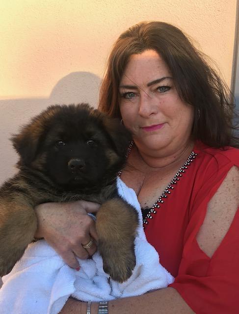 German Line Shepherd Puppies