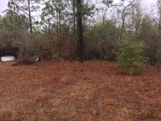 Almost 2 Acres of land!!