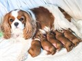 Our puppies will make a wonderful addition to your family All of our puppies are raised right in ou