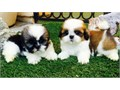 text us for details 510 296-5061They are 10 weeks old They are very cute and are ready for real