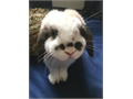 1 Male 122717 8 months spotted Intact No meet-ups for bunnies Serious inquiries only