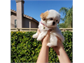 Rehoming a female 8 12 week old puppy she comes with her first shots I am asking a rehoming fee