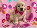 We strive to raise the best puppies that we canso that we can make other families as happy with our